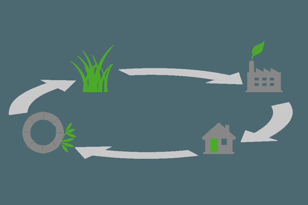 Bambus Produktcyclus